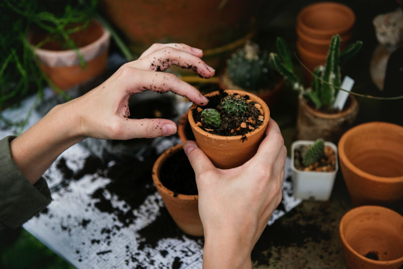 Gardening is viewed as a form of social prescribing
