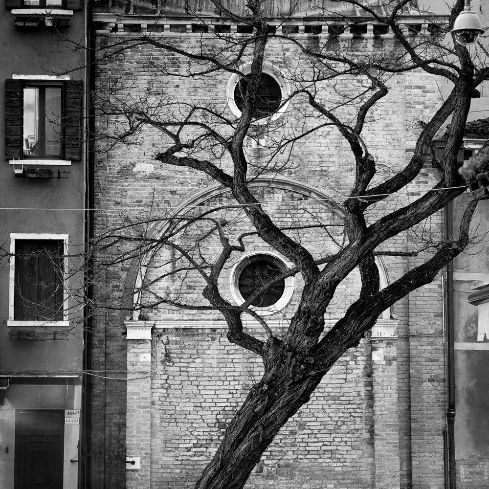 City tree.jpg