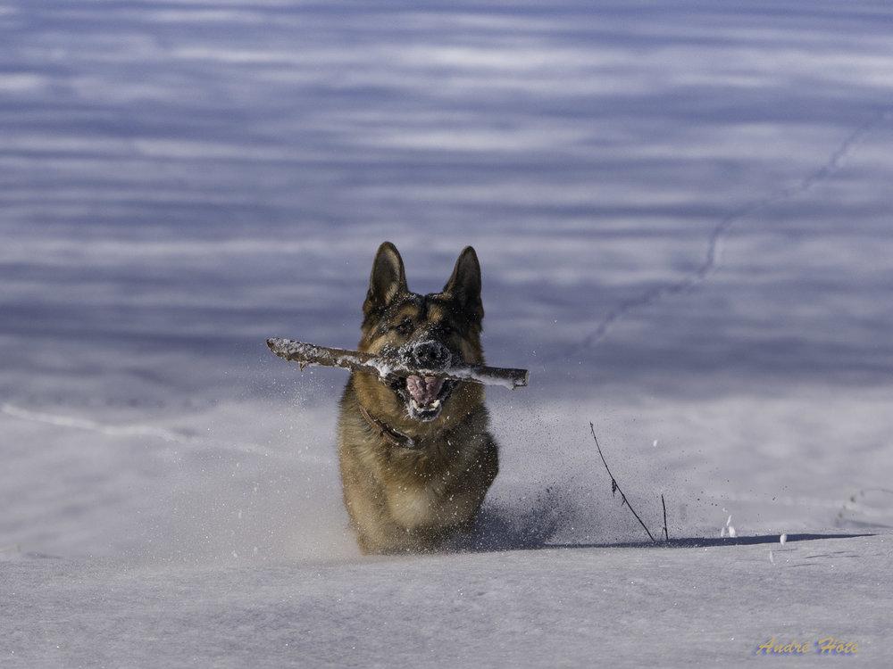 Gréco face neige bâton_1020348