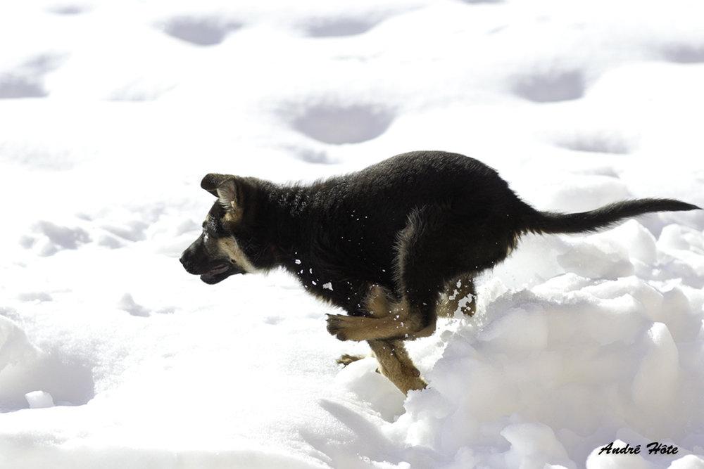 Gréco court neige_7022