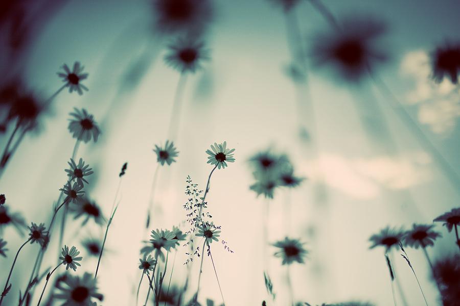blomsterhage_MG_5836.jpg