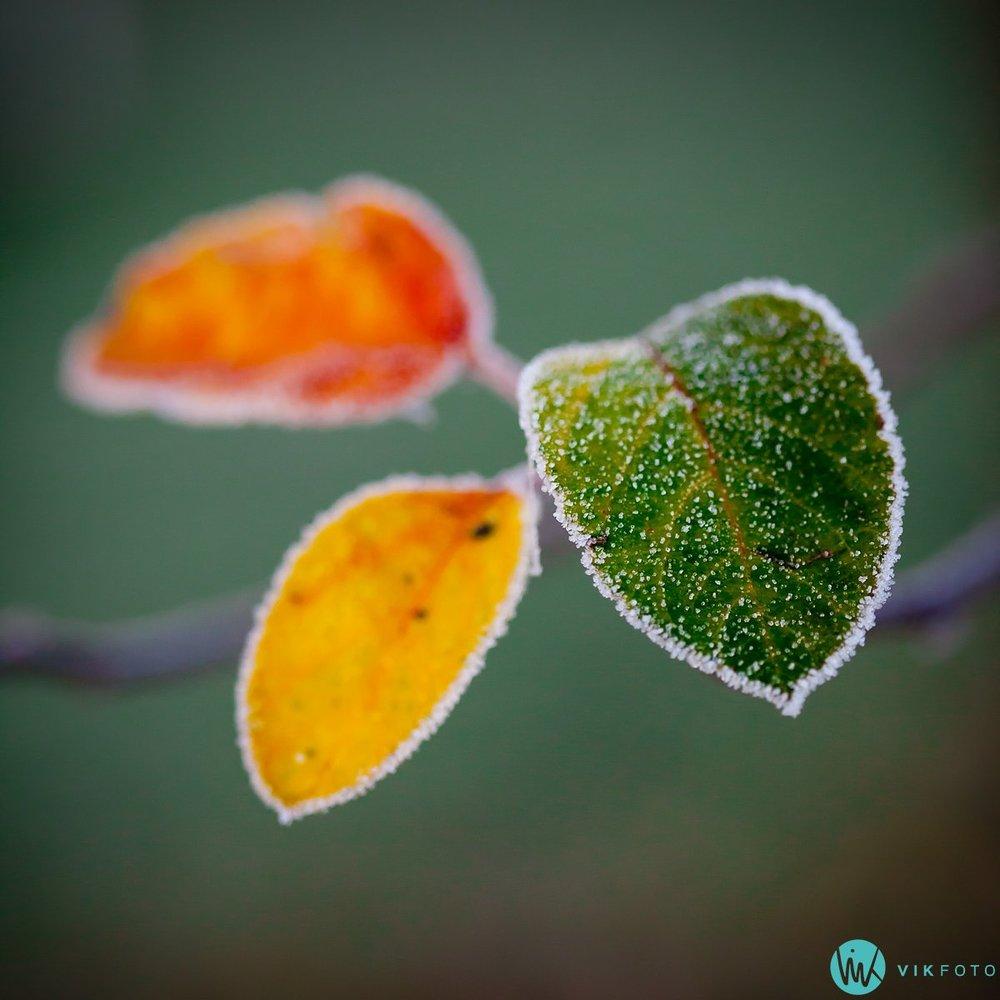 foto-tips-kompaktkamera-macro-høst-blader.jpg