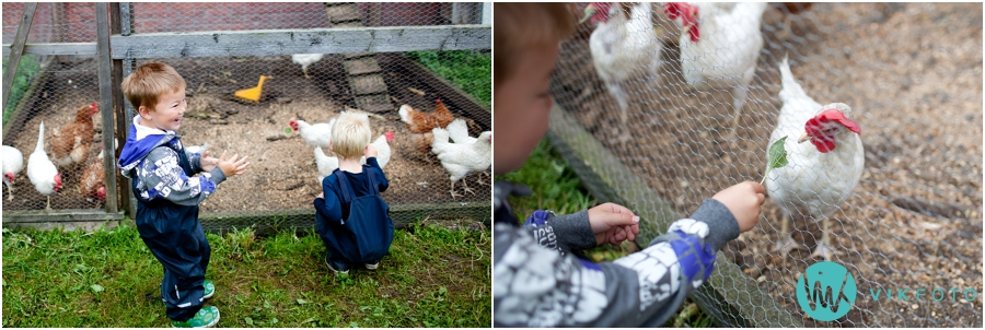 dyr-gard-barn-lek.jpg