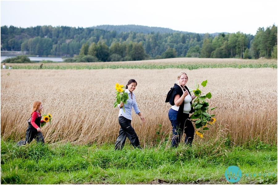 selvplukk-solsikker-sarpsborg-fredrikstad.jpg