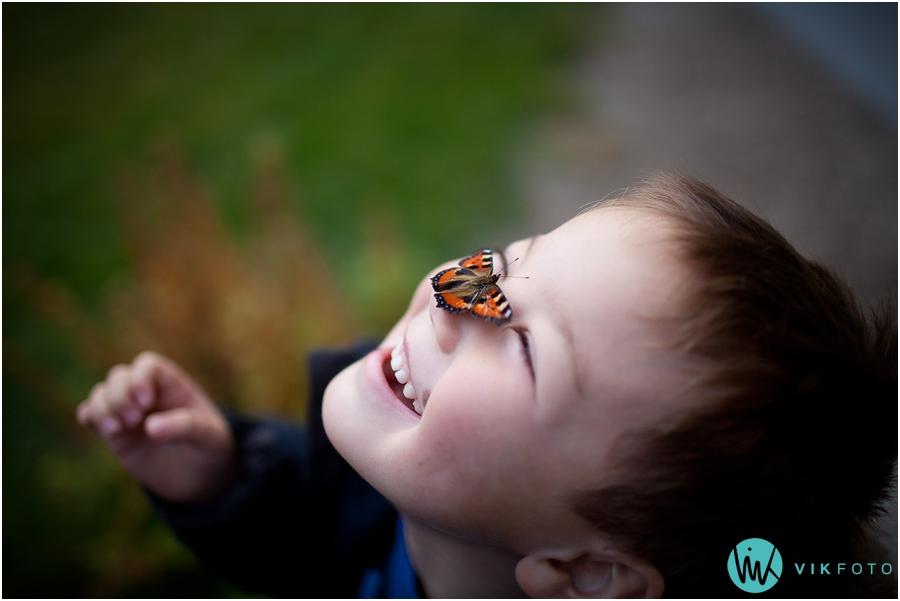 sommerfugl-november-fotograf-sarpsborg.jpg