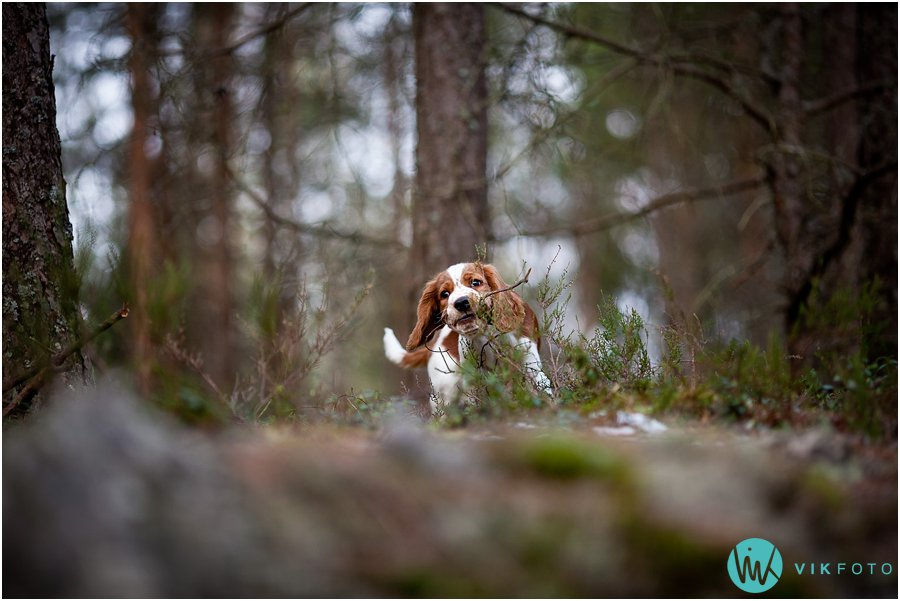 hund-portrett-hundefotograf-dyrefotograf-sarpsborg-01.jpg