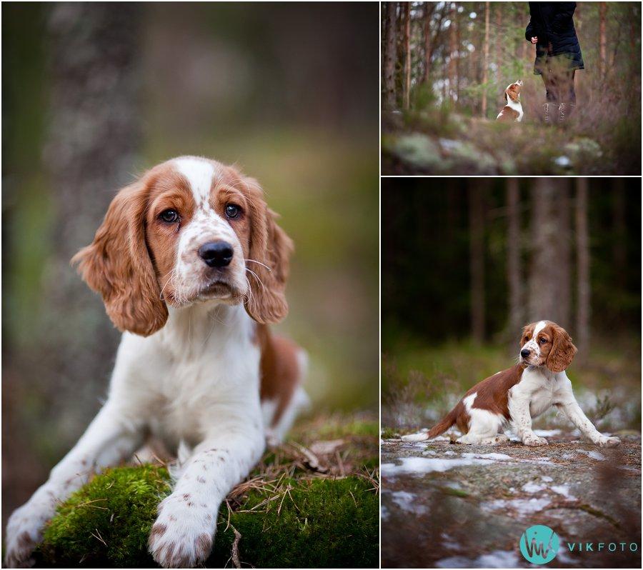 hund-portrett-hundefotograf-dyrefotograf-sarpsborg-02.jpg