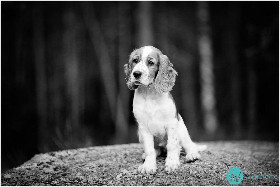 hund-portrett-hundefotograf-dyrefotograf-sarpsborg-07.jpg