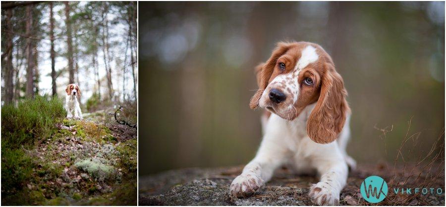 hund-portrett-hundefotograf-dyrefotograf-sarpsborg-08.jpg