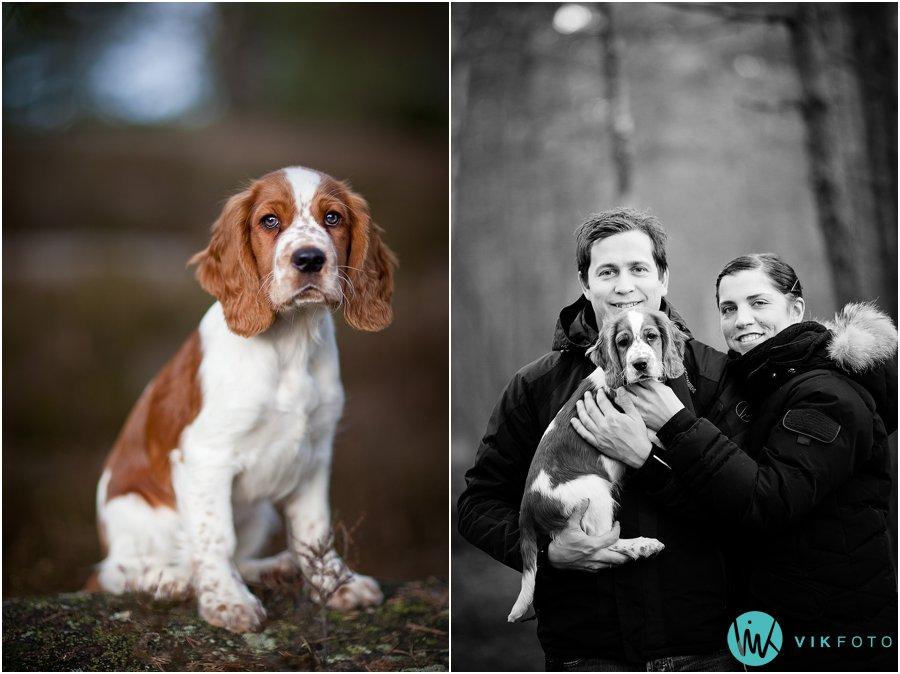 hund-portrett-hundefotograf-dyrefotograf-sarpsborg-09.jpg