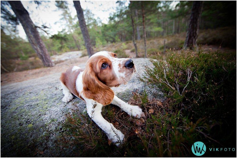 hund-portrett-hundefotograf-dyrefotograf-sarpsborg-10.jpg