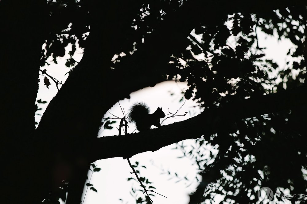 04-bryllupsfotograf-firenze-castello-del-trebbio.jpg