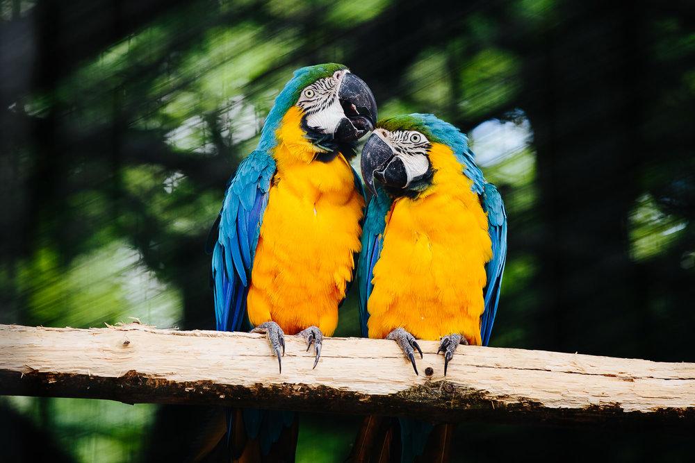 papegøye-dyrepark