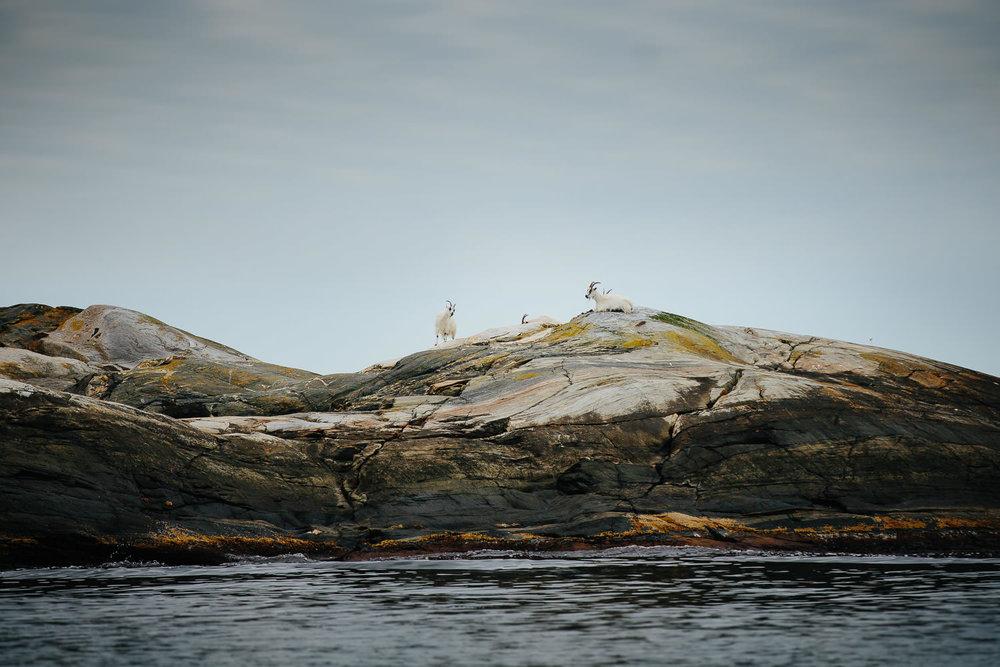 seiltur-seilbat-norge-sverige-ramso-vederoerna-097.jpg