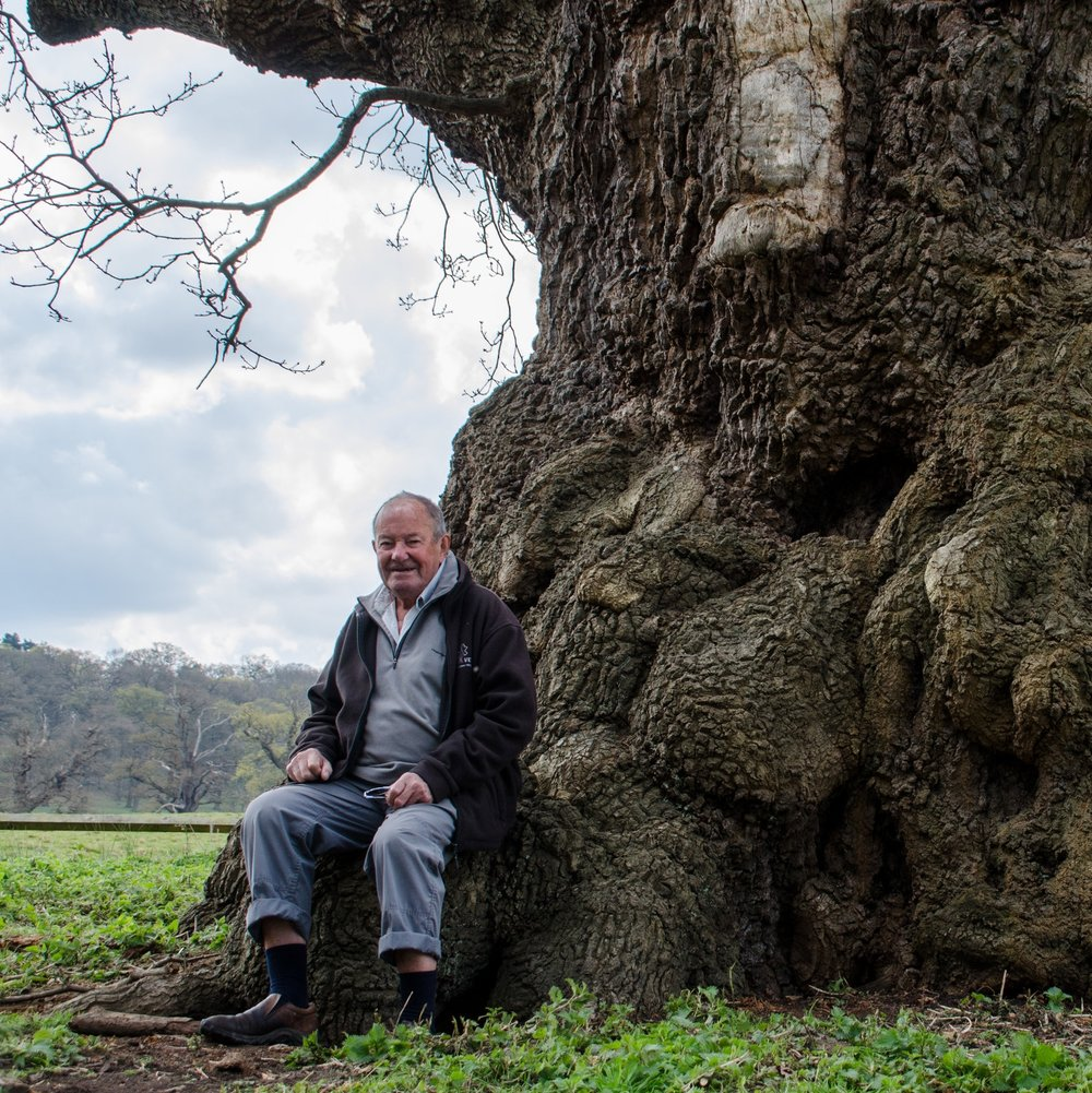 'These thousand year old oaks represent a biological continuity dating back perhaps only seven generations to the last Ice Age. They are not only of historic interest but are also a valuable part of our cultural heritage'.   Ted Green  Conservation Consultant at Windsor Great Park and founder member of the Ancient Tree Forum.