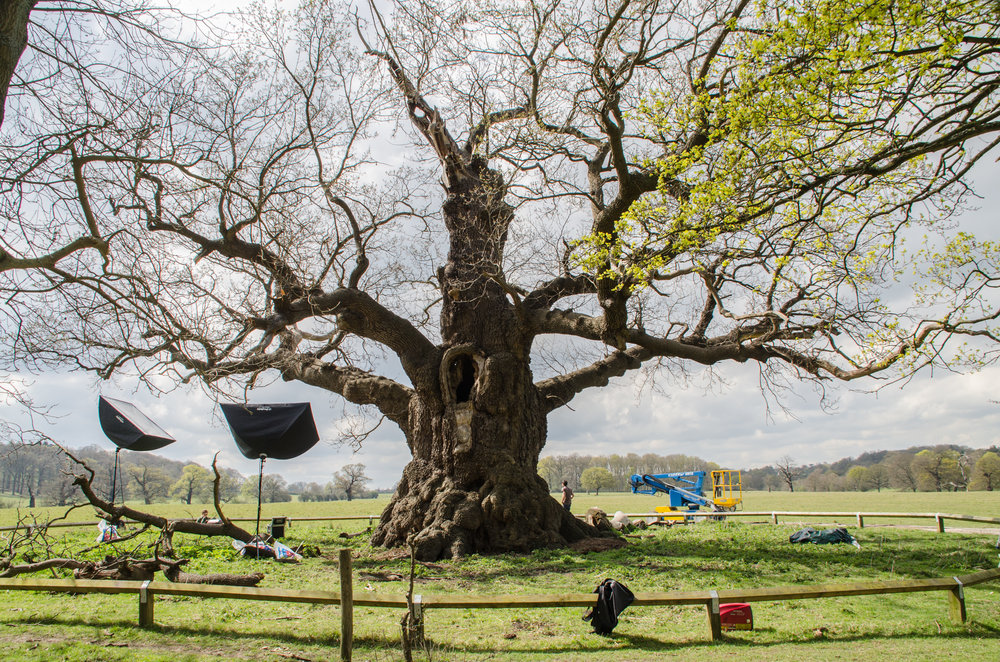 Recording the ancient oak at Windsor Great Park using photogrammetry.