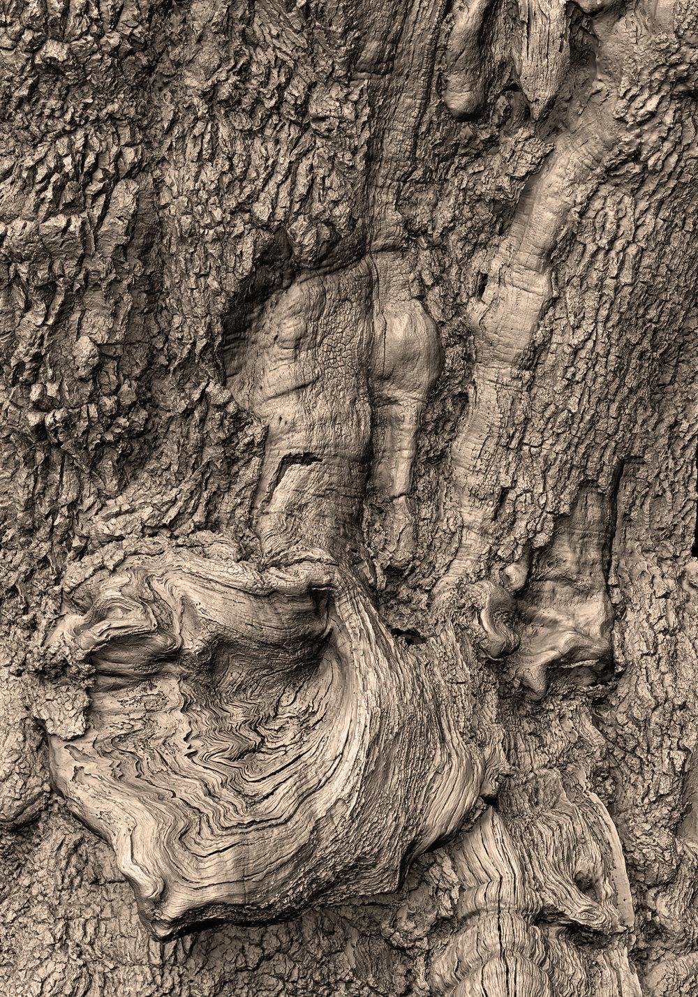 Bronze oak render (3).jpg