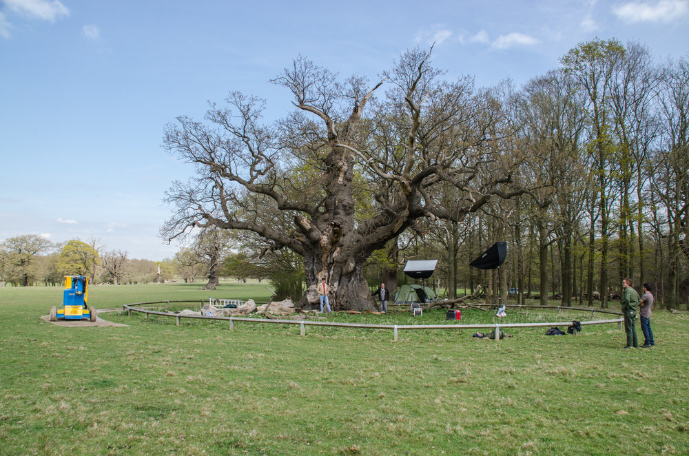 Bronze oak tree (5).jpg