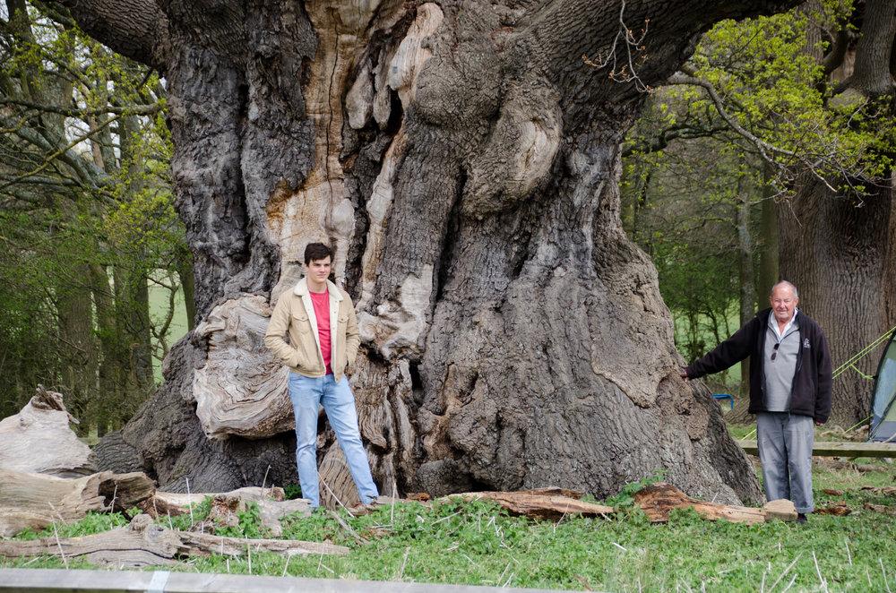 Bronze oak tree (6).jpg