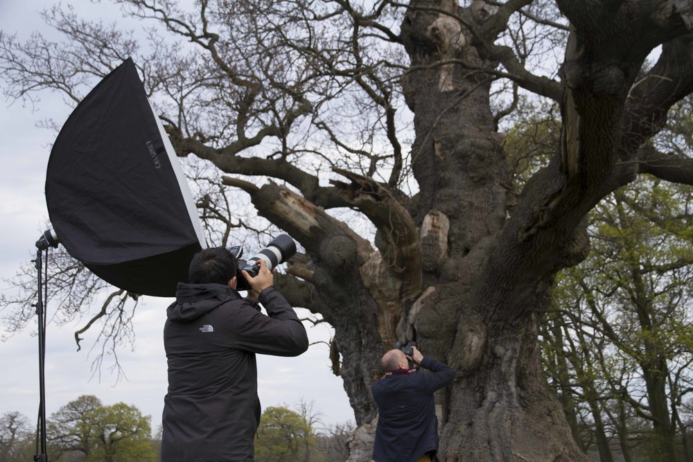 Bronze oak tree (27).jpg
