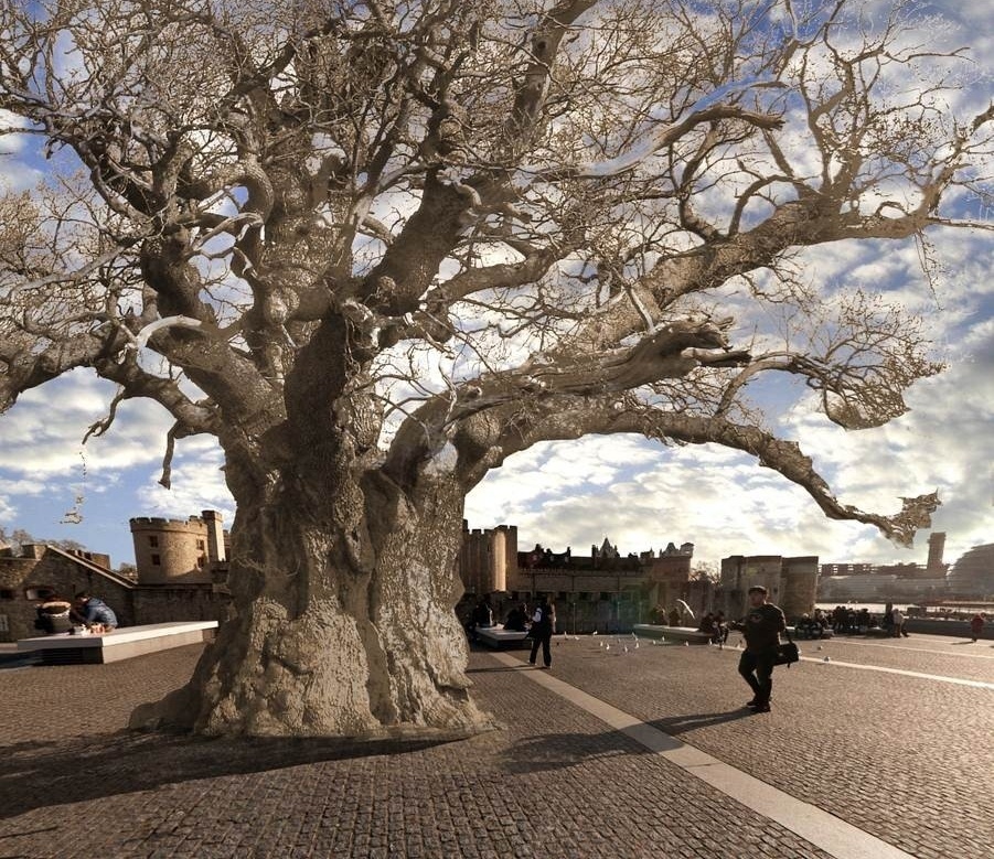 Photomontage showing the bronze oak in front of the Tower of London.