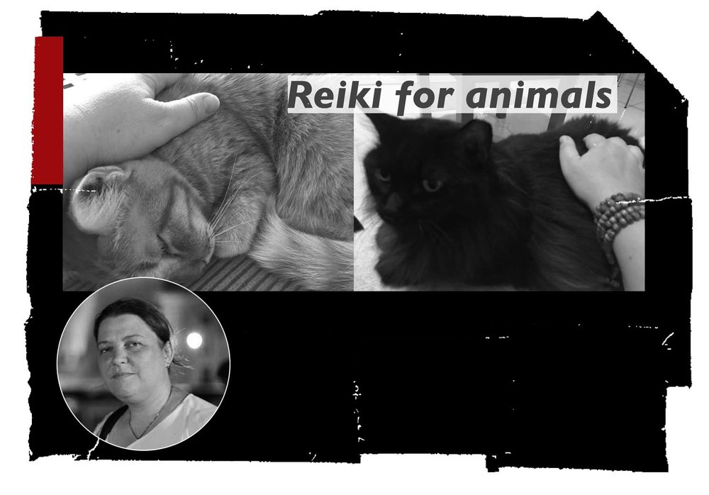 S20_Bianca Polak - Reiki for Animals_1.jpg