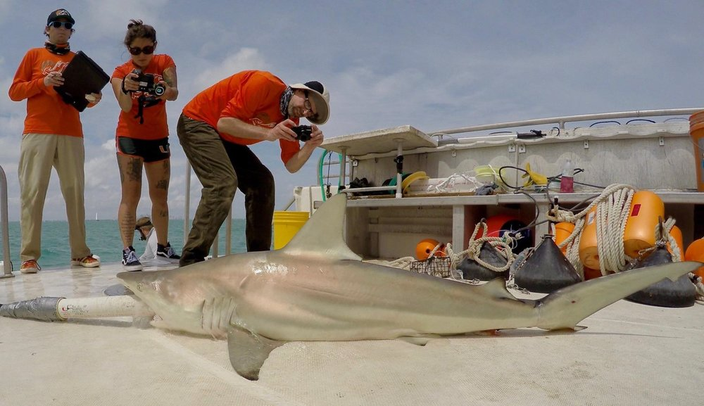 Dr. Duncan Irschick using a single camera to 3D scan a shark