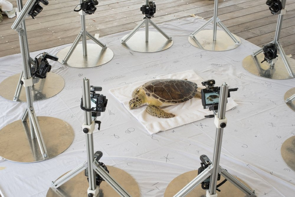 The Beastcam technology arranged around a green sea turtle.  Photograph by Christine Shepard.
