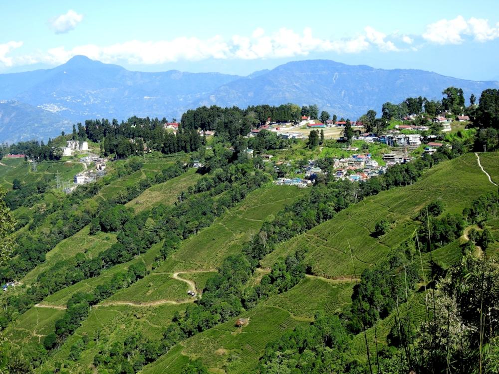 Darjeeling tea landscape