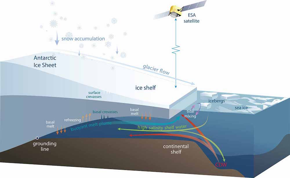 Schematic diagram of an Antarctic ice shelf showing the processes causing the volume changes measured by satellites. Ice is added to the ice shelf by glaciers flowing off the continent and by snowfall that compresses to form ice. Ice is lost when icebergs break off the ice front, and by melting in some regions as warm water flows into the ocean cavity under the ice shelf. Under some ice shelves, cold and fresh meltwater rises to a point where it refreezes onto the ice shelf.   Source