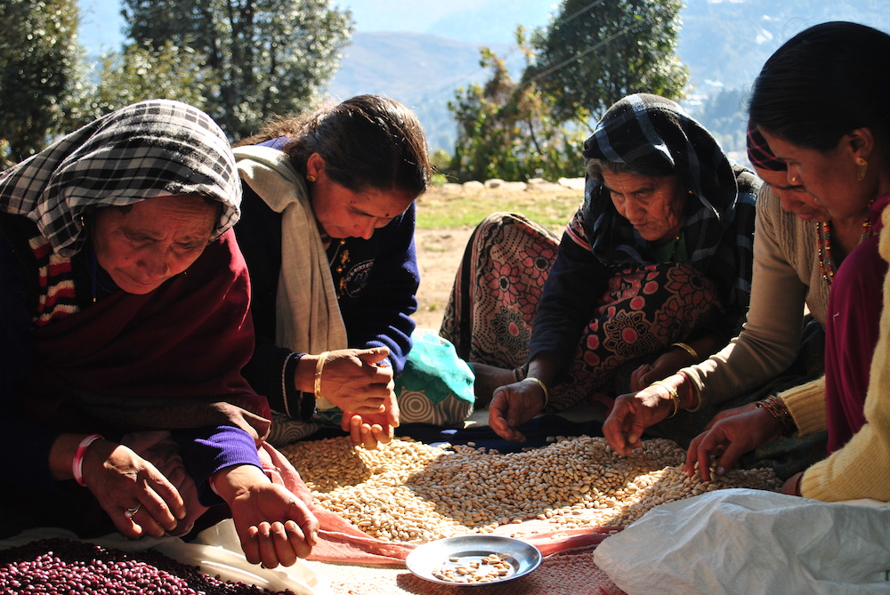 Sustainability is not just about the crops and resources, it is also about the farmer's livelihood. here, farmers clean and sort rajma in Munsiyari, Uttarakhand. Image: Courtesy Crop Connect