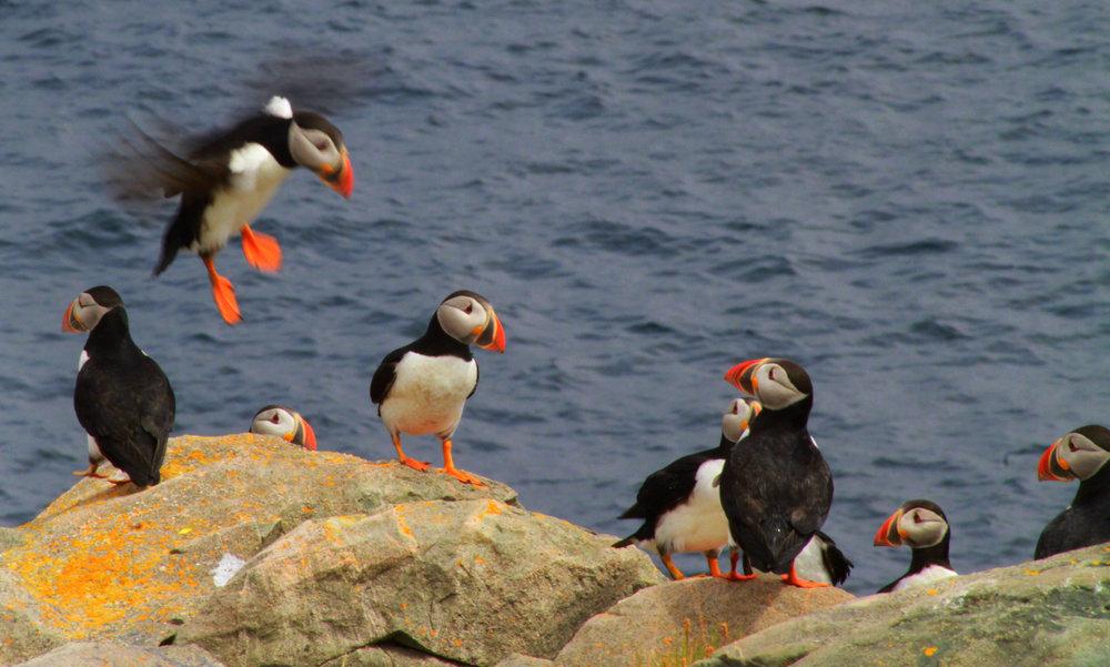 Baccalieu Island Ecological Reserve