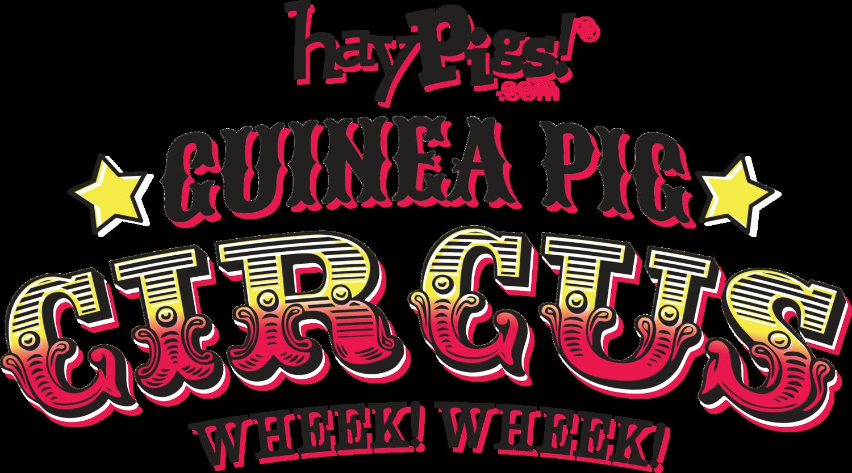 HayPigs!® | Guinea Pig Circus — How long do guinea pigs live?