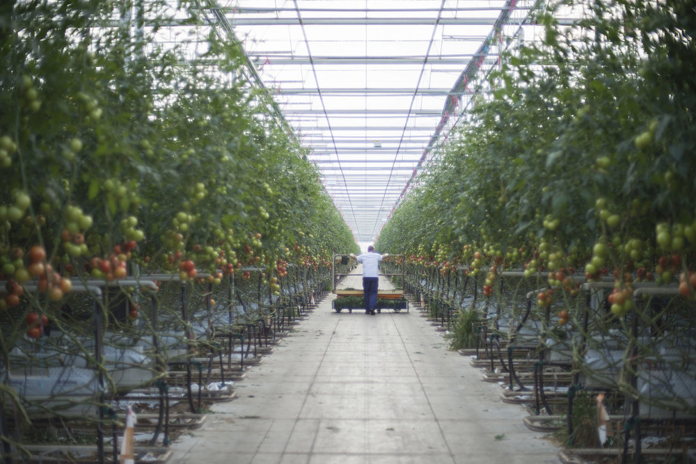 HOLLAND_GREENHOUSE_6.jpg