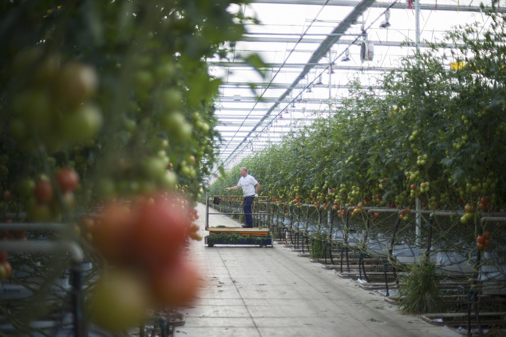 HOLLAND_GREENHOUSE_7.jpg