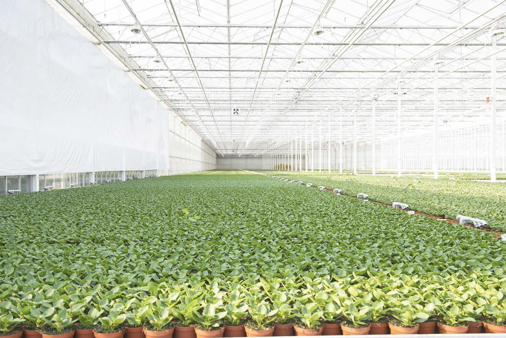 HOLLAND_GREENHOUSE_17.jpg