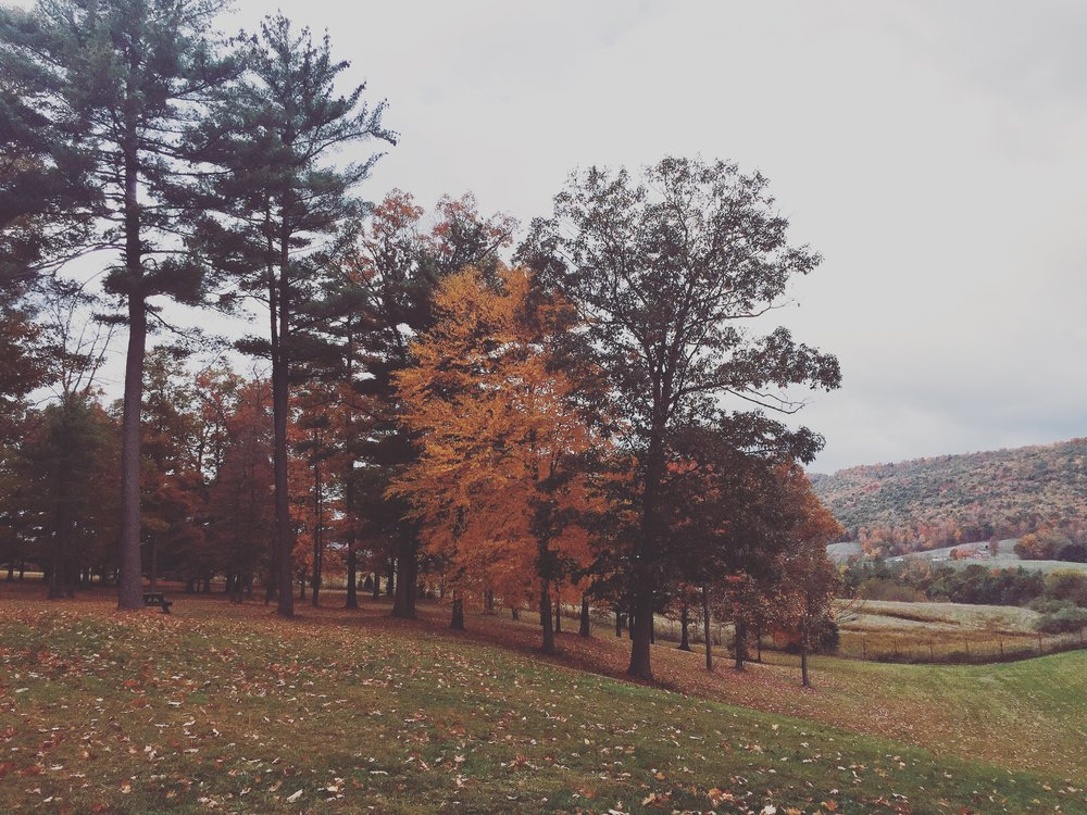 The autumnal view at our last rest stop in Maryland before arriving in DC.