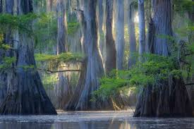 Honey Island Swamp  One of my favorite places, and it captured my imagination as a child. A natural wonder. I grew up on the east bank of the Pearl River. Honey Island Swamp was the natural barrier between my small town and New Orleans.