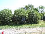 156_Vasser_tree_farm.JPG