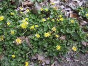 176_Close_up_of_yellow_flowers.JPG