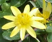 176_Joe_s_Yellow_Flower_Jean_Cropped.jpg