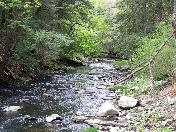 176_Nice_section_of_a_small_stream..JPG