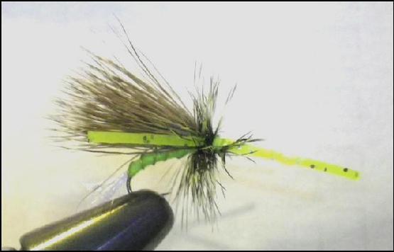 Chartreuse Skunk