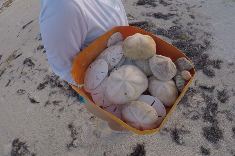 Shelling at our Beach