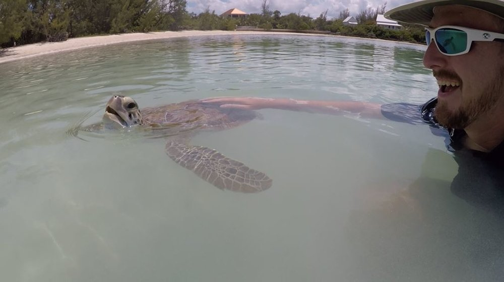 Green Turtle Cay Turtle Encounter