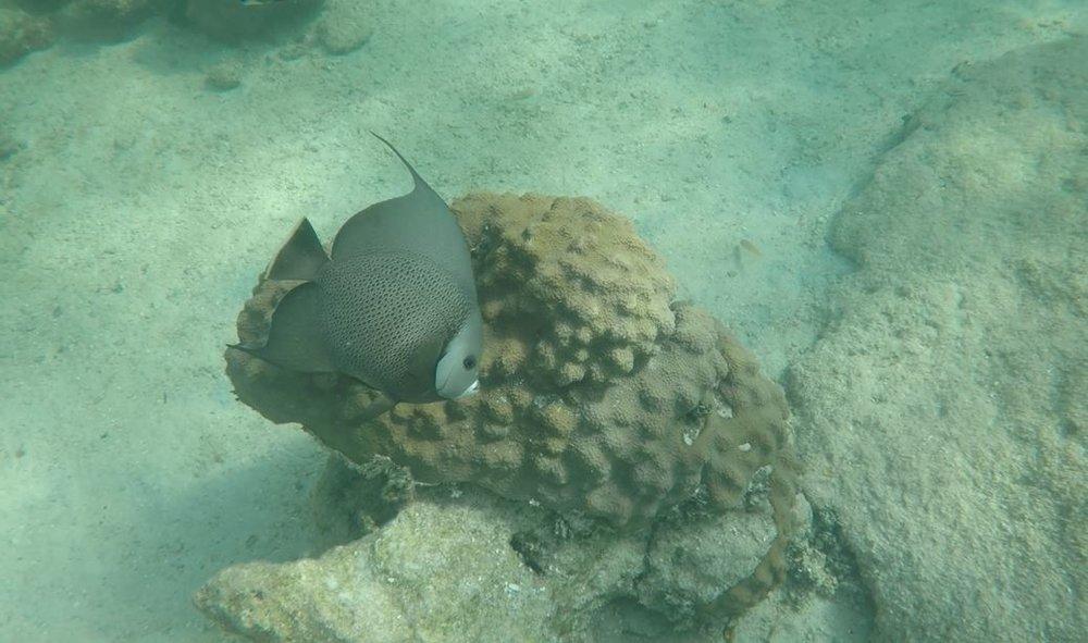 Mermaid Reef Angel Fish