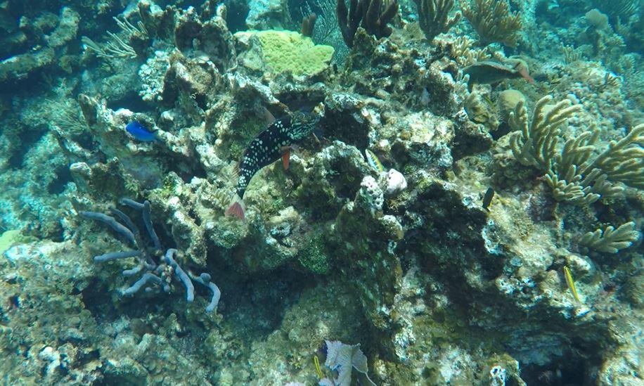 Reef Stop Fish
