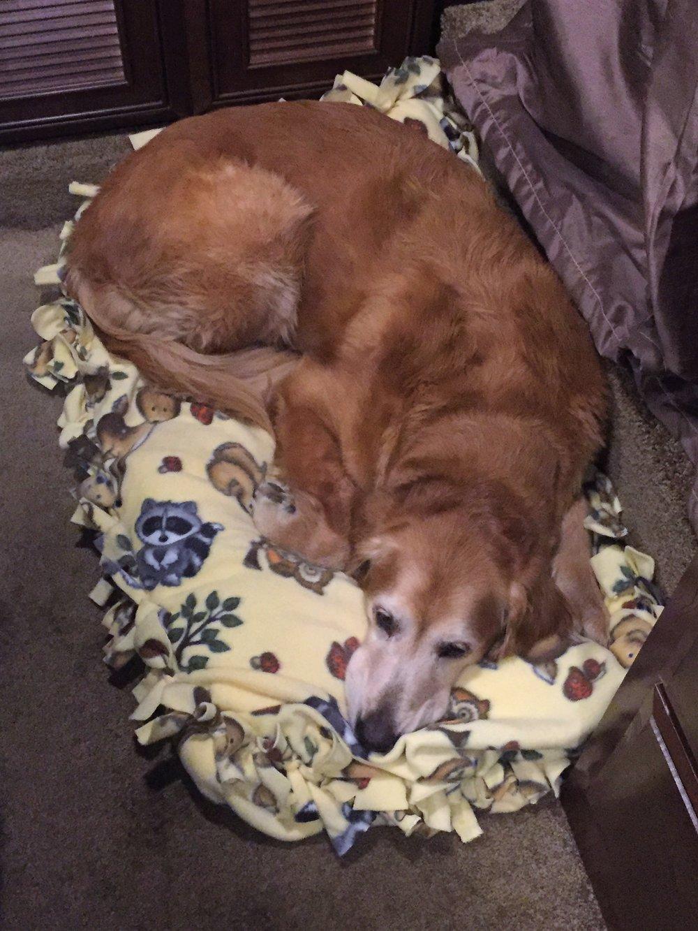 Andi Sleeping on Fleece