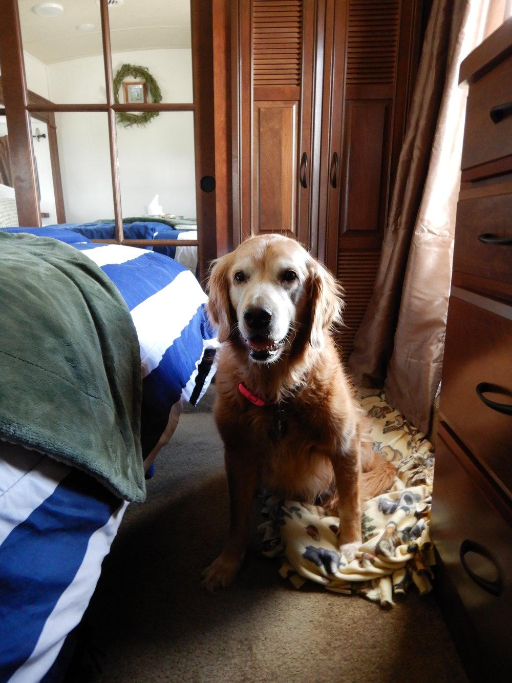 Dog Bed_After.JPG