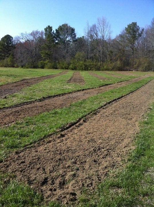 Morning Glory Farms- plowed fields.jpg